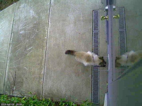 tweetingcatdoor.jpg