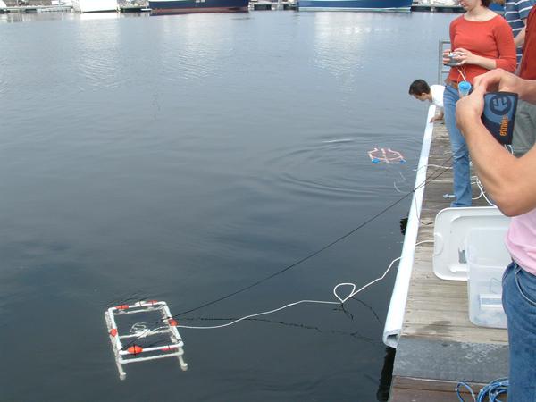 SeaPerchWaterTesting.jpg