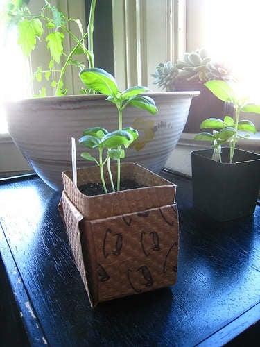 cardboardsleevereplanter.jpg