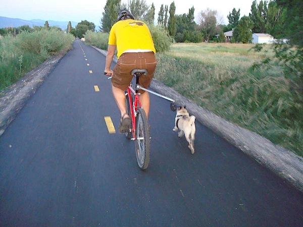 bikedogwalker.jpg