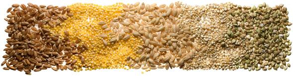 Chow Grains101