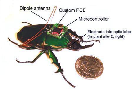 beetleBorg1.jpg