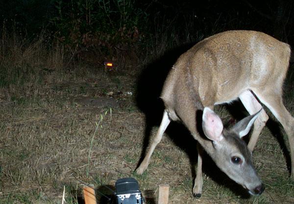 flashback-wildlife-camera-deer.jpg