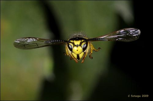 insect_in_flight.jpg