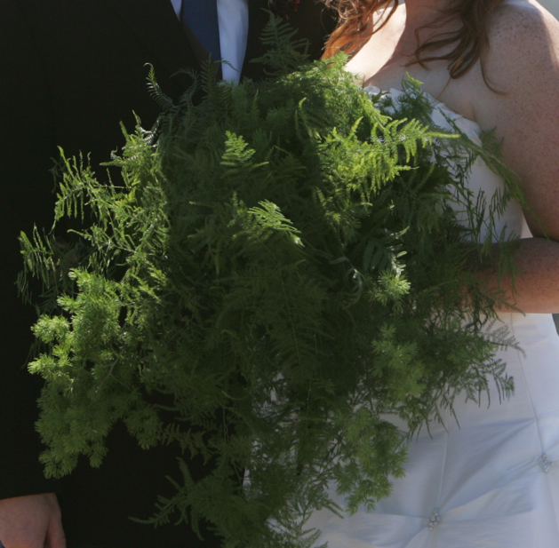 brookelynnsweddingferns1.jpg