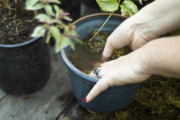 hanging_planter_0002.jpg