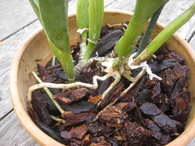 orchidrepot1.jpg