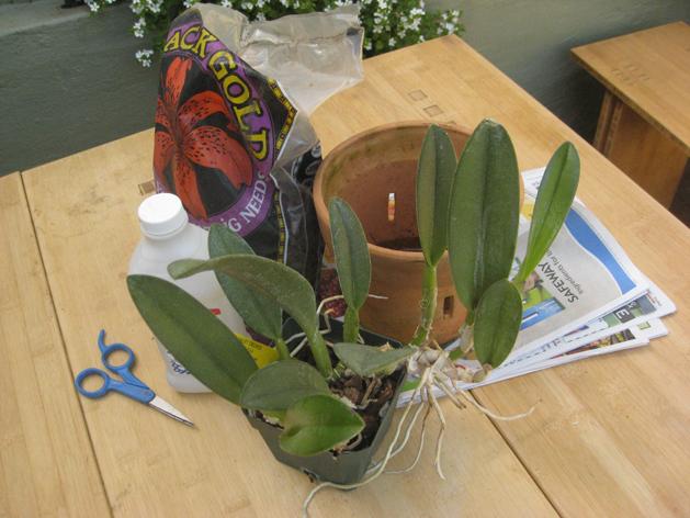 orchidrepot10.jpg
