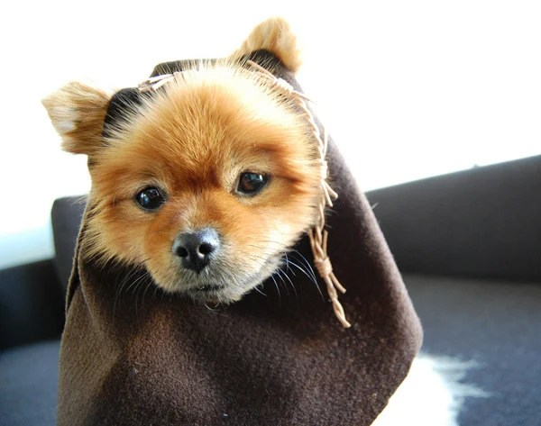 Star_Wars_Day_Crafts_Ewok_Dog.jpg