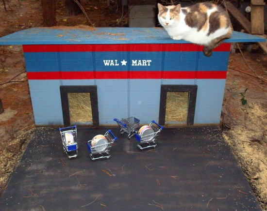 cat-walmart.jpg