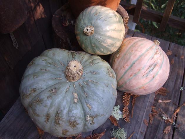 pumpkinsselect2.jpg