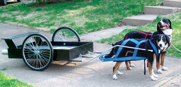 karts-and-wheels-dog-cart.jpg
