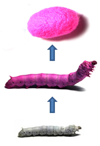 silkworms_color_silk.jpg