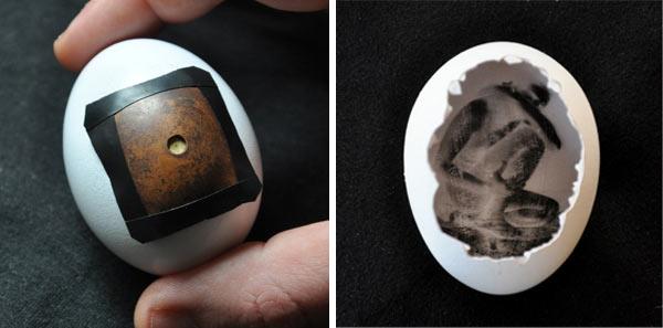 Pinhegg - Pinhole Camera Egg