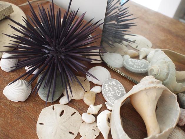 Sea Urchin.jpg