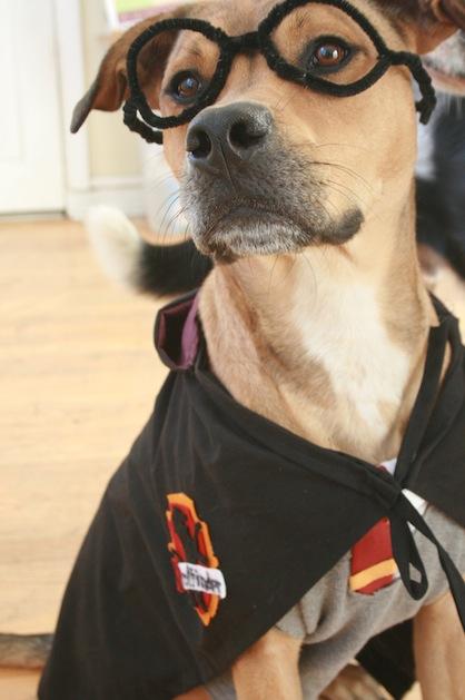 harry_potter_dog_costume.jpg & How-To: Harry Potter Dog Costume | Make: