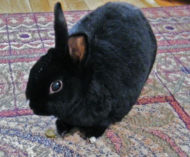 DIY homemade bunny treat.jpg