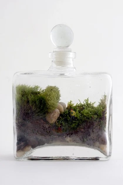 twig_terrariums_terrarium_kit.jpg