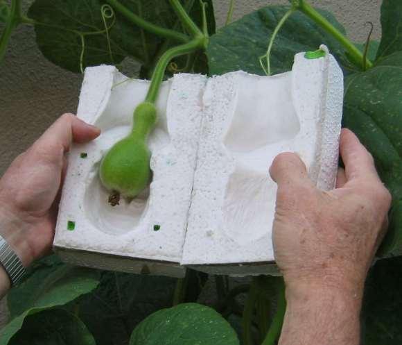 gourd-going-into-mold-1.jpg