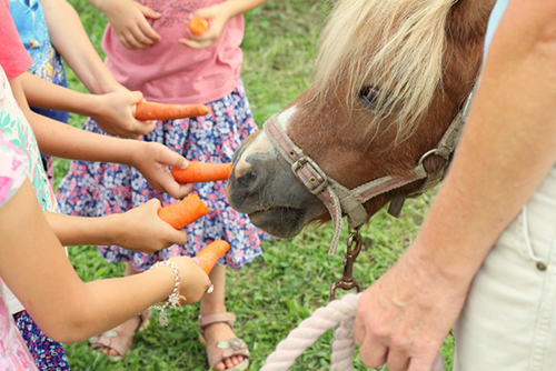 farm_party4.jpg