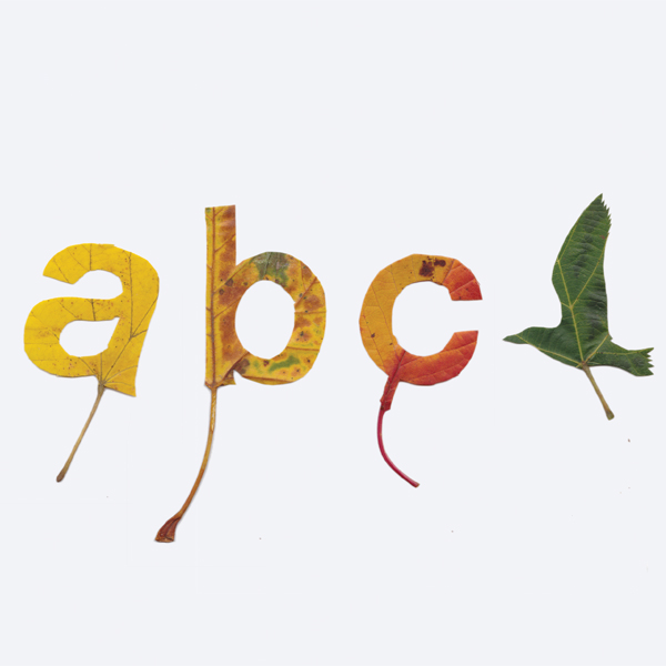 studiogloeilamp_leaves_abc_with_bird.jpeg