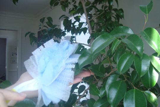 filthy-houseplant-1