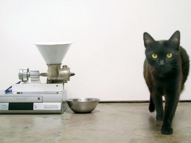 vcr cat feeder