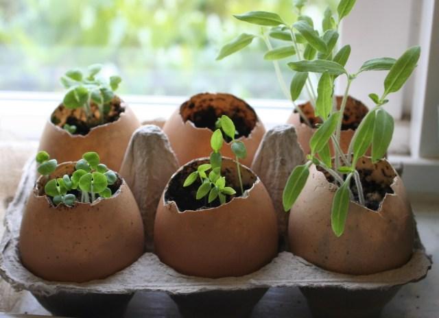 egg-shell-planter-1