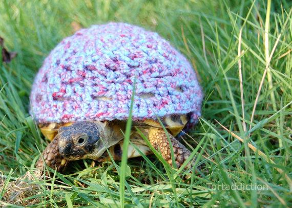 Crocheted Tortoise Cozies Make