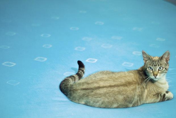 CRAFT_bedspread_dye_final_cat