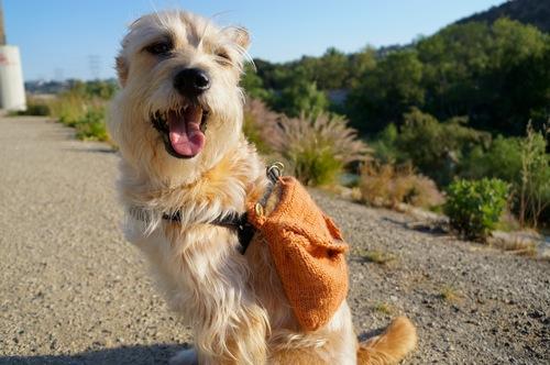 adventure-dog-2