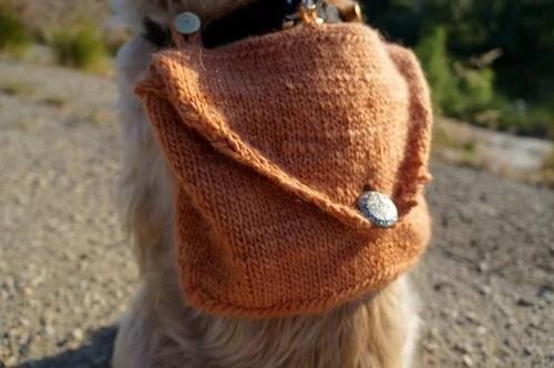 adventure-dog-3