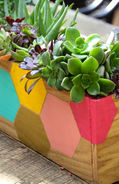 pepperdesignblog_hexie_planter