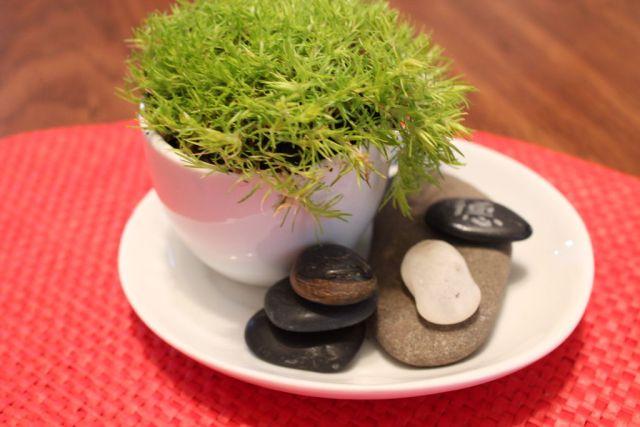 mini-green-tea-garden-1
