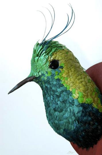 jose-hummingbird-1
