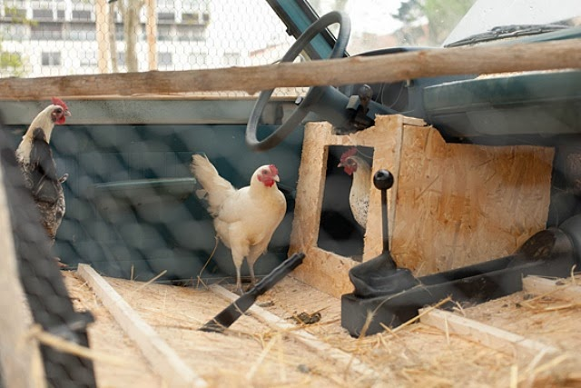 police-car-chicken-coop-3