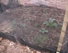 Water-Efficient Wicking Beds