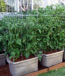 Gardening Without A Yard Make