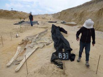 Excavating Cerro Ballena (Image courtesy of Cerro Ballena and the Smithsonian Institution)