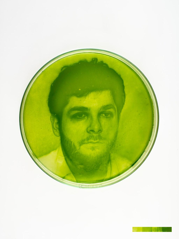 algae-graphs-1