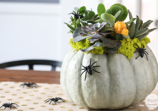succulent-pumpkin-planter-1