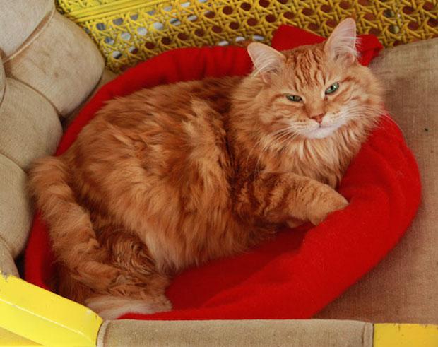 auntpeaches_cashmere_cat_bed_01