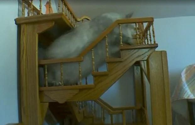cat-stairs