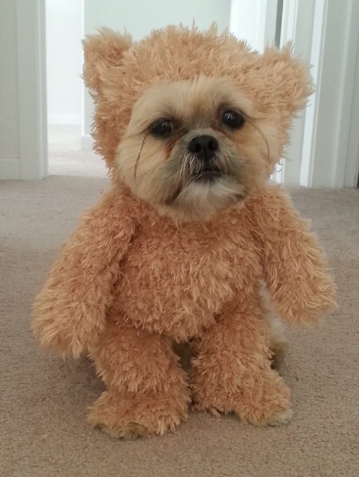 How to make a walking teddy bear costume for your dog make munchkin teddy bear 1 solutioingenieria Image collections