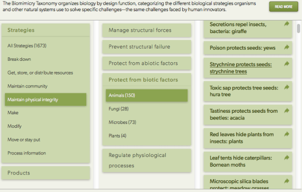 Biomimicry Taxonomy results from AskNature.org.