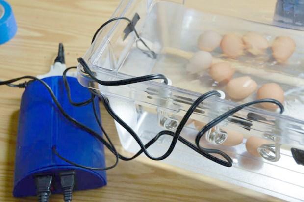 final_eggs_all