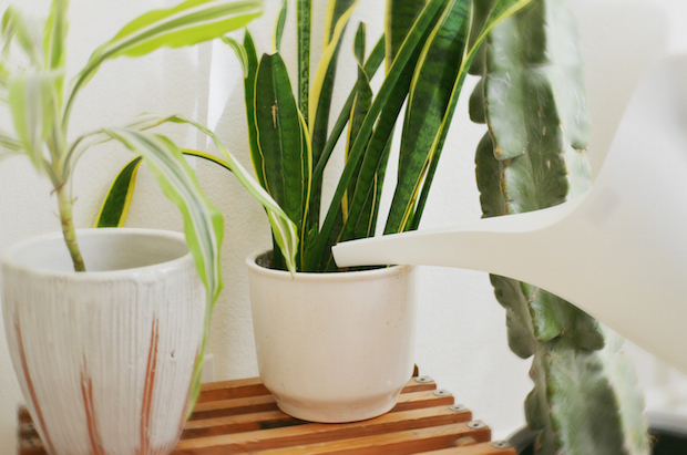 abeautifulmes_indoor_plants_02