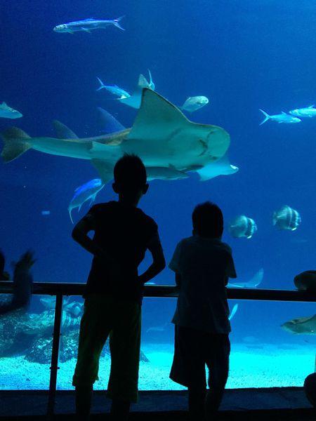 【親子旅遊】與鯊魚共眠:夜宿海生館 – 媽媽經 專屬於媽媽的網站