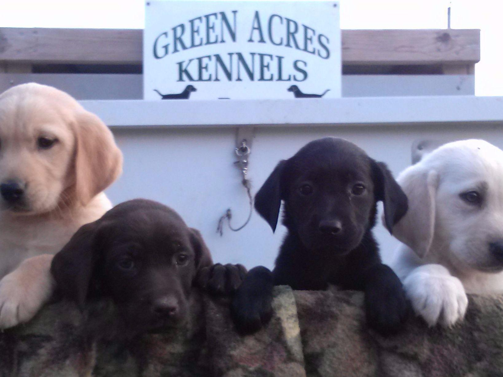 Green Acres Kennels Puppies For Sale