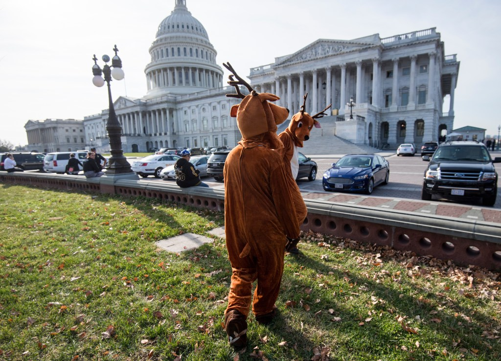 Reindeer wander off at the end of the Senate Democrats' news conference and rally opposing drilling in the Arctic National Wildlife Refuge at the Capitol on Thursday. A number of activists dressed up as polar bears and reindeer for the event. (Photo By Bill Clark/CQ Roll Call)